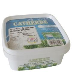 Herbe à chat (dépurative)