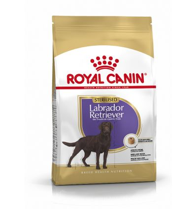 Labrador Retriever Sterilised