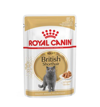 British Shorthair Adult Sauce